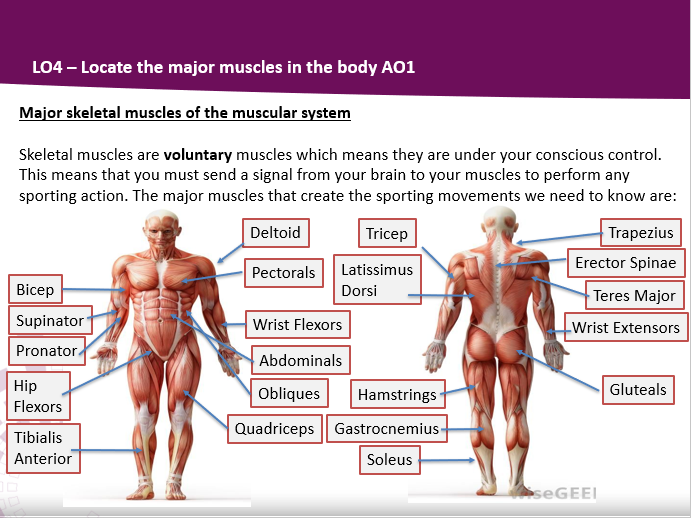 BTEC Sport Level 3 Muscular System Complete Teaching Pack