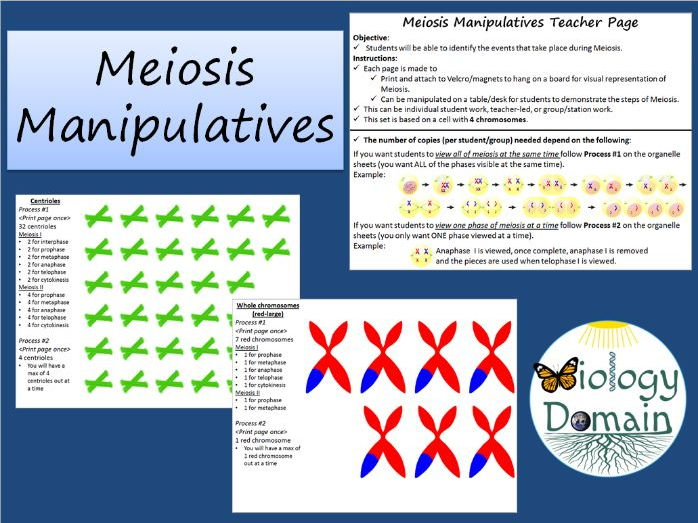 Cell Division: Meiosis Manipulative Activity