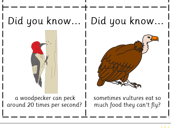Fun Fact Cards: Birds