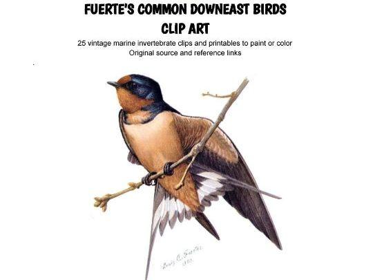 COLOR & LEARN - Fuertes' Common Downeast Birds - Clip Art