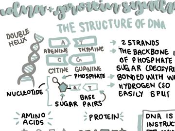 GENETIC B3 - GCSE SEPEARATE TRIPLE SCIENCE HIGHER EDEXCEL