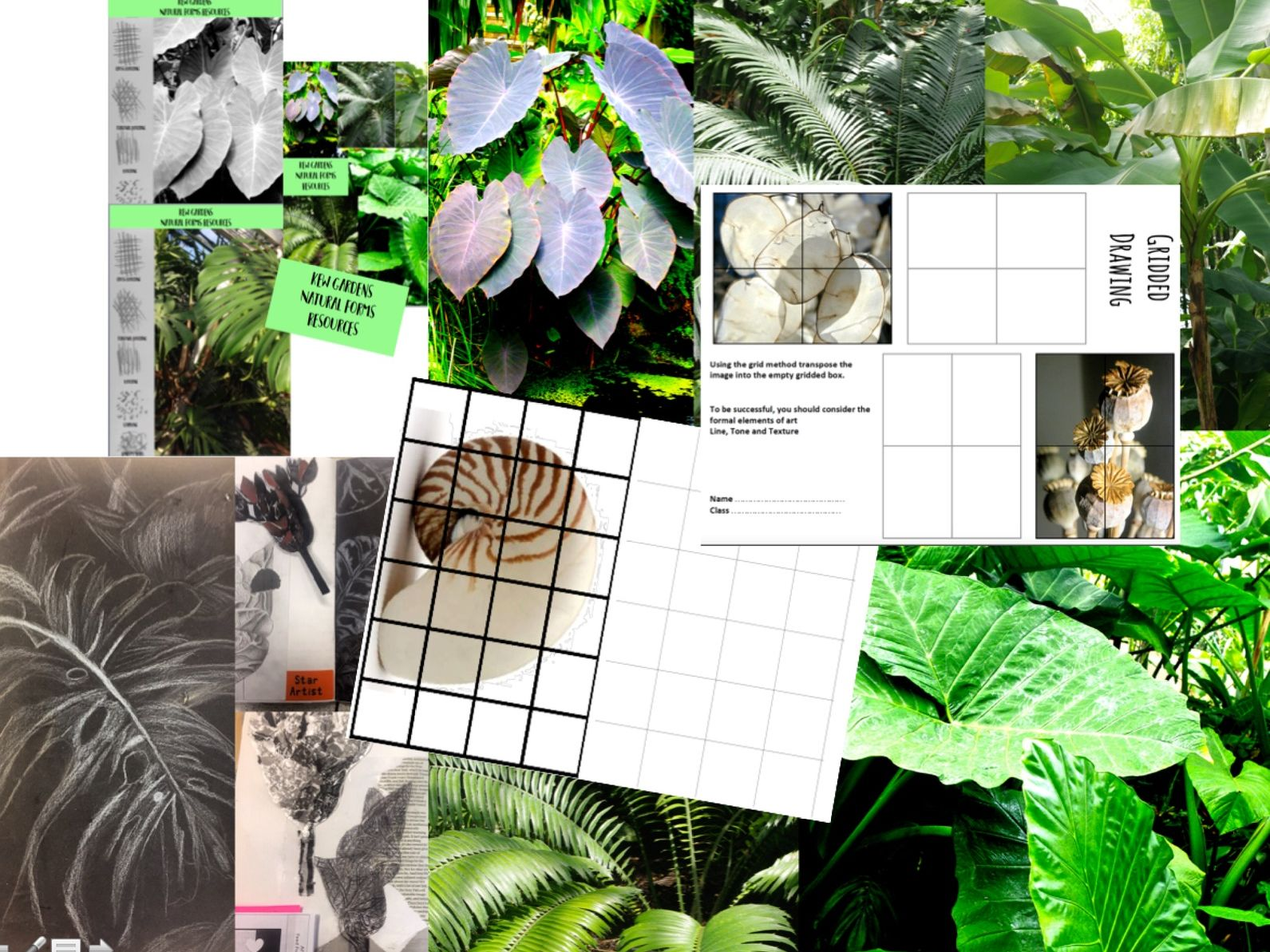 Natural Forms /  Kew Gardens  Lesson and Image Resources