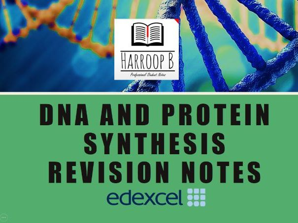 AS/A Level Biology - Edexcel - Protein & DNA Synthesis | Enzymes - Revision Notes