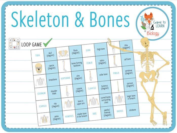 Skeleton and Bones - Loop Game (KS2/3)