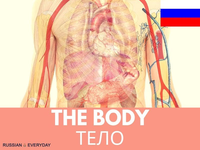 Russian Words-The Body: AUDIO, VIDEO and eBOOK: FULL LESSON