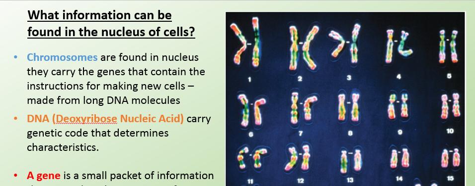 B2.1 AQA Cell Division