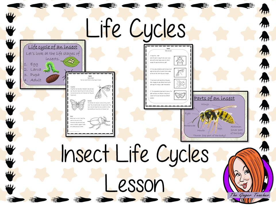 Insect  Life Cycles   -  Complete Science Lesson