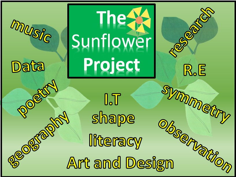A cross curricular creative approach to discovering the life cycle of a sunflower