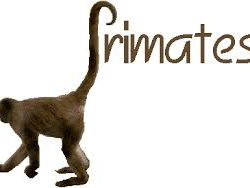 Reading Comprehension-Primates Facing Extinction
