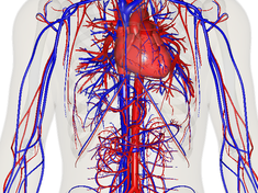 AQA GCSE BIOLOGY B2.2 Circulatory system