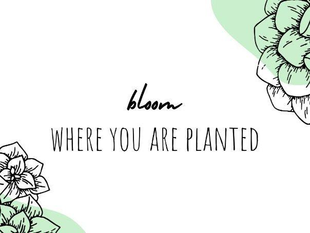 Plant Theme Desktop Wallpapers