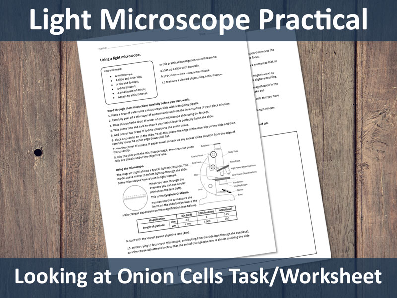 Light Microscope Practical - Onion Cells (GCSE required practical)