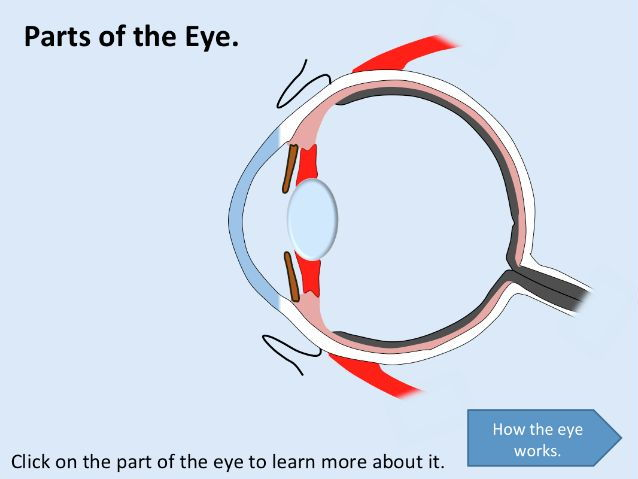 KS3 Physics Lesson Resources - Light - The Human Eye (Lesson 5)