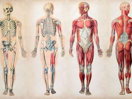 APPLIED SCIENCE UNIT 4 THE HUMAN BODY