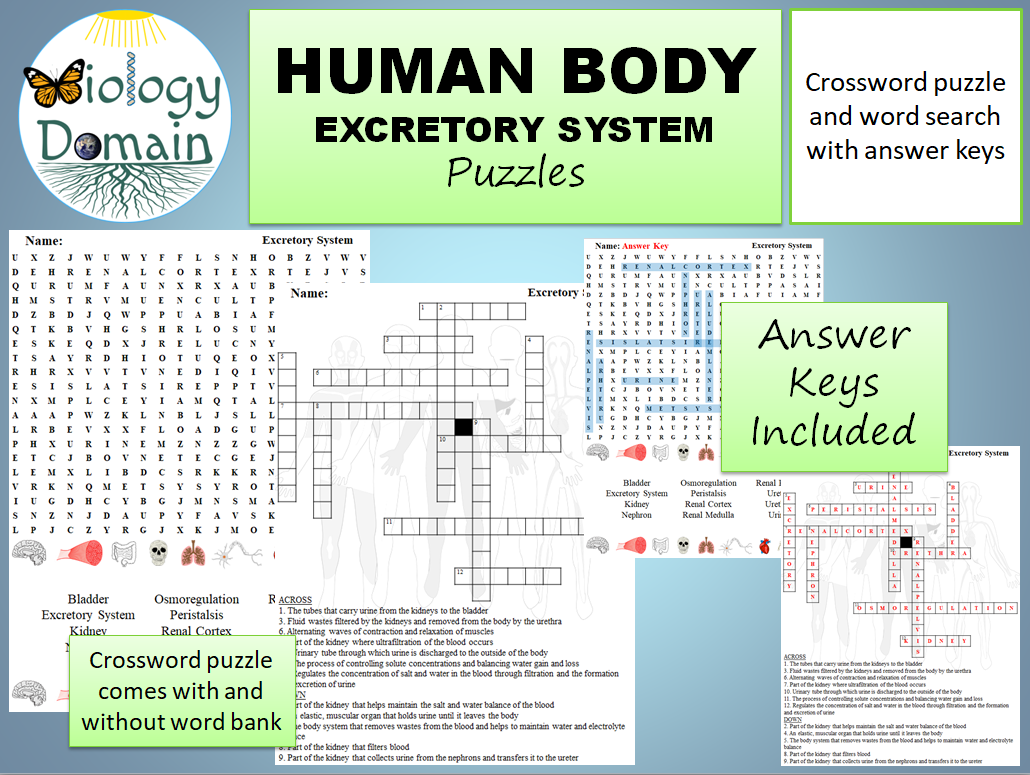 Chapter 7 Urinary System Crossword Puzzle Answers ...