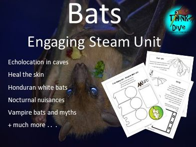 Project based learning: Bats, KS1,  NGSS, STEAM, Biomimicry