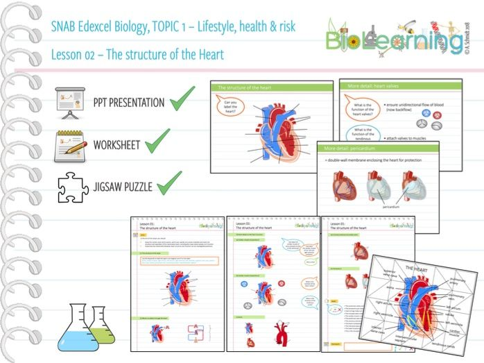 SNAB Biology Topic 1 -  Lesson 2 (Structure of the heart) – WS, PPT and Jigsaw puzzle
