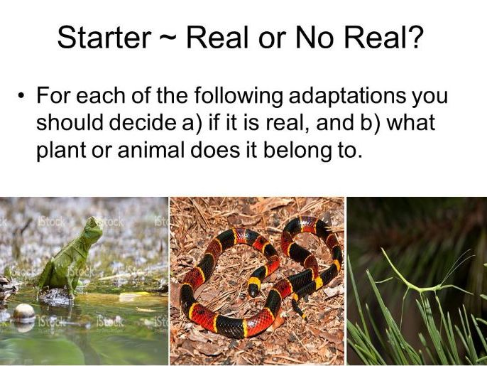 Amazing Adaptations (2x KS3 lessons)