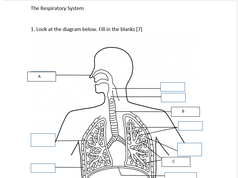 Respiratory system test by williamrong123 teaching resources tes cover image ccuart Image collections