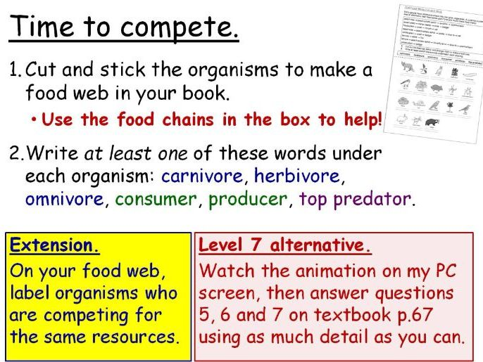 Food Chains and Webs (Effects on the Environment) Year 7 Lesson PowerPoint (KS3 7Da) Ecosystems