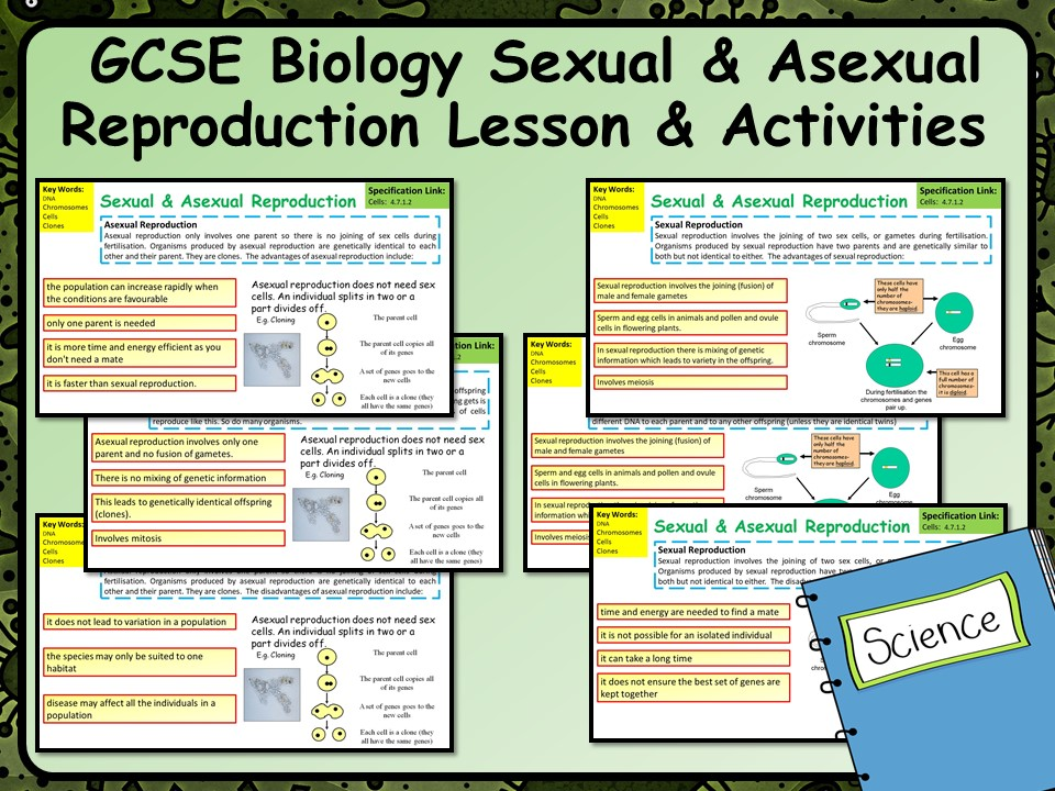 KS4 AQA GCSE Science Spec Sexual & Asexual Reproduction Lesson | Teaching Resources