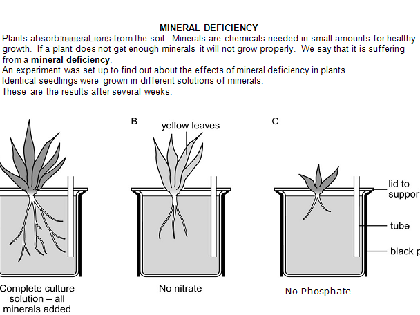 KS3 work sheet on mineral deficiencies in plants