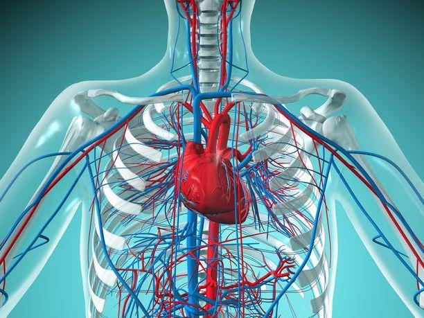 AQA GCSE PE - 2016 New Spec - Revision - 1.3 Cardiovascular system broadsheet