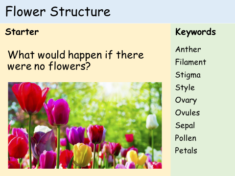 Ks3 plants lesson 2 structure of a flower and dissection by cover image ccuart Gallery