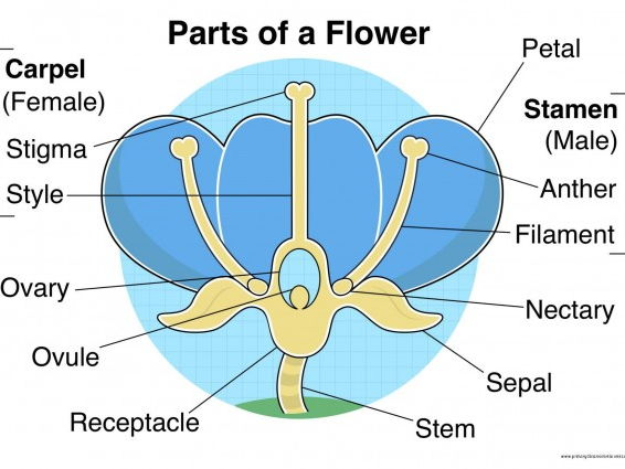 Parts of a Flower Mixed Poster/Mat Pack
