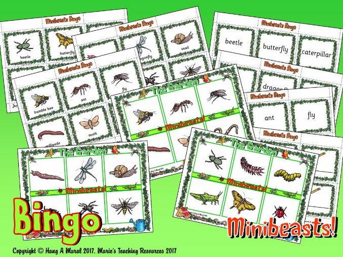 Minibeasts – Bingo