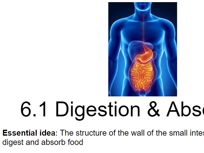 IB Biology - 6. Human Physiology - PowerPoint Presentations
