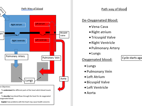 Cardiovascular System Flow of Blood diagram