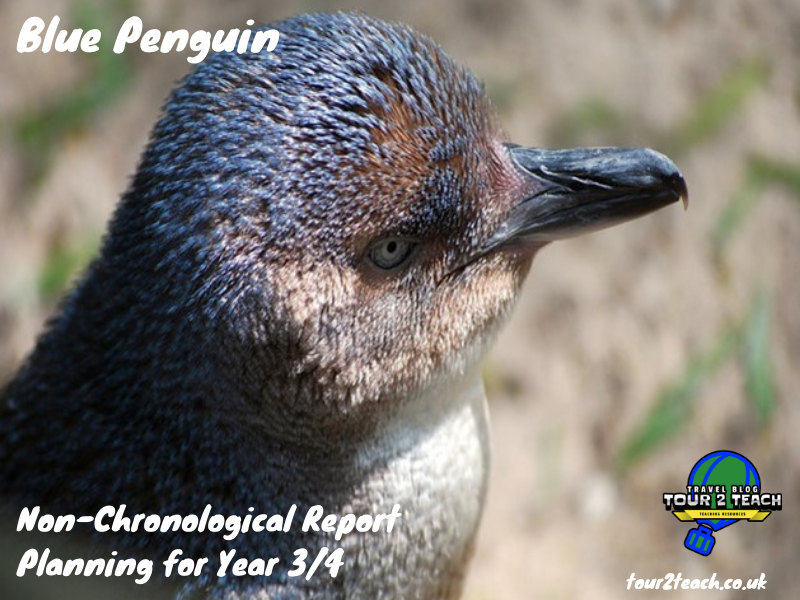 Blue Penguin: Non-Chronological Report Planning for Year 3/4