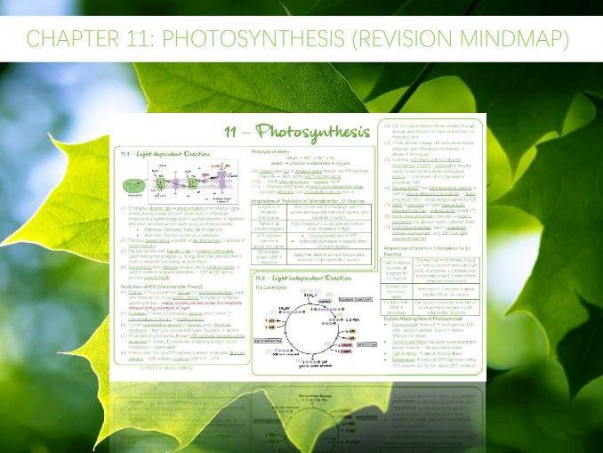 AQA A-Level - Biology : 11 - Photosynthesis (Revision Mindmap)