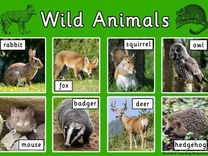 WILD ANIMALS - COUNTRYSIDE - A4 POSTER WITH TEXT