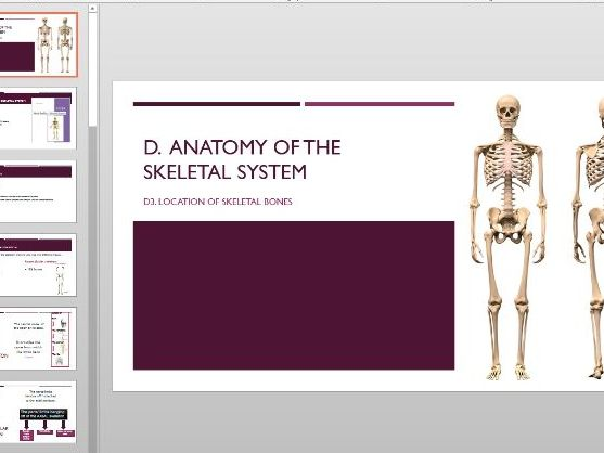 Structure of skeletal system