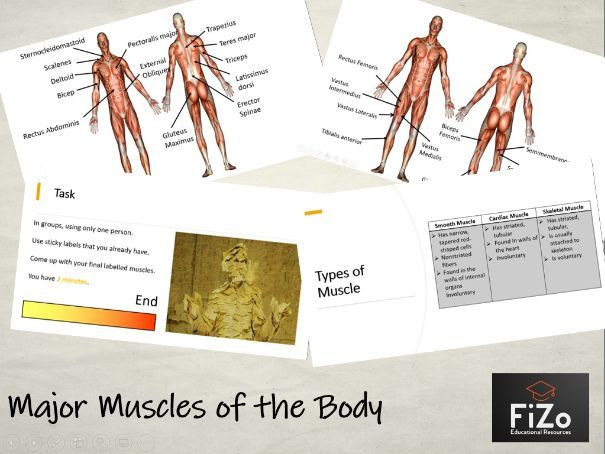 BTEC Sport - Major Muscles of the Body
