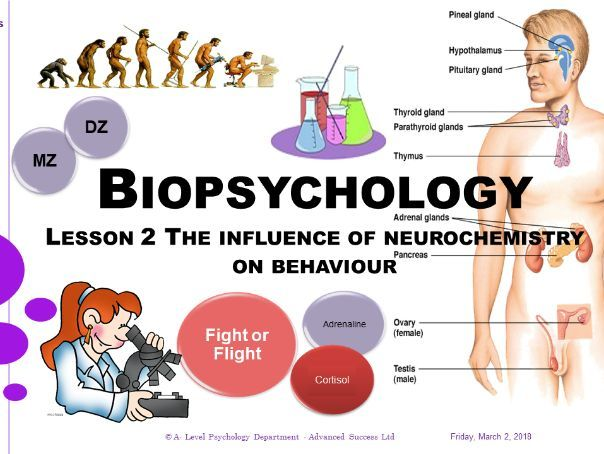 Powerpoint - Biopsychology - Lesson 2 - The influence of neurochemistry on behaviour.