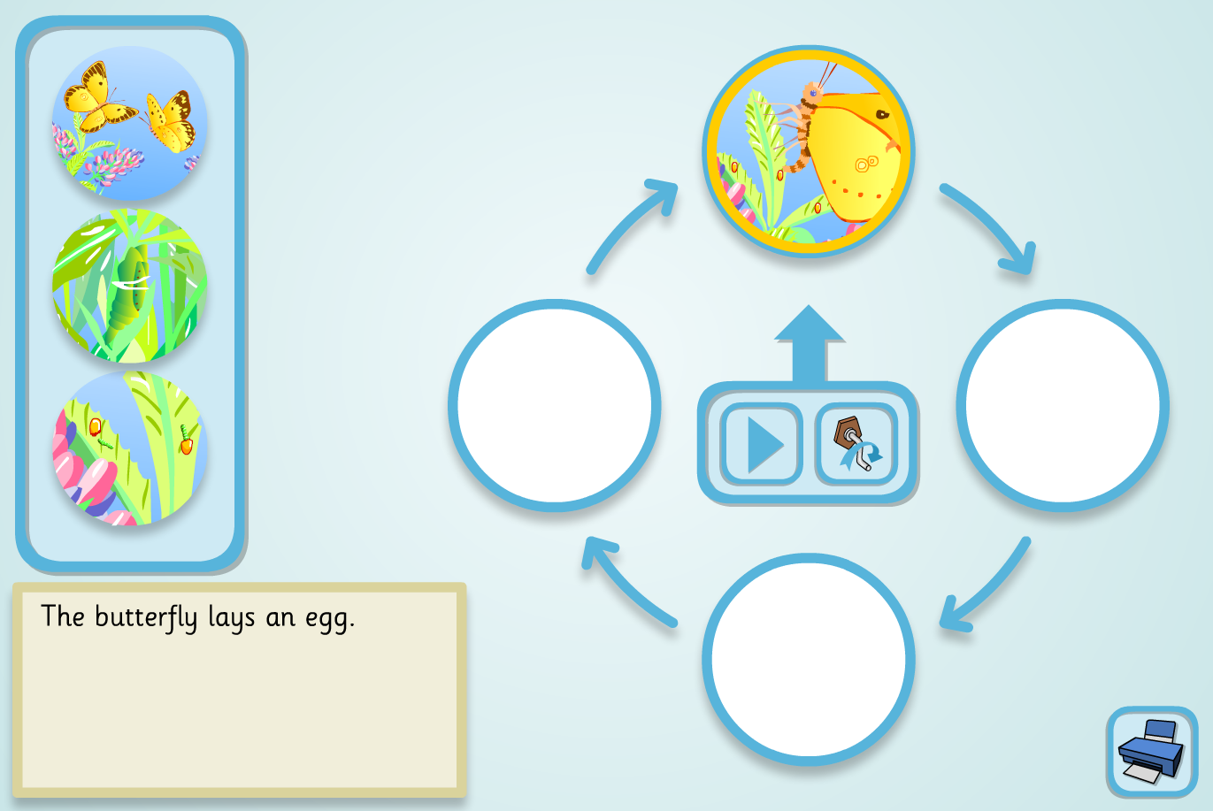 Butterfly Lifecycle Sequencer (Simple) - KS2 Literacy