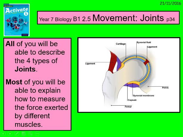"""A digital version of the Year 7 B1 2.5 """"Movement: Joints"""" lesson."""