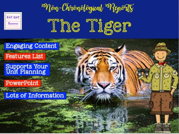 Non- Chronological Report Writing - The Tiger POWERPOINT