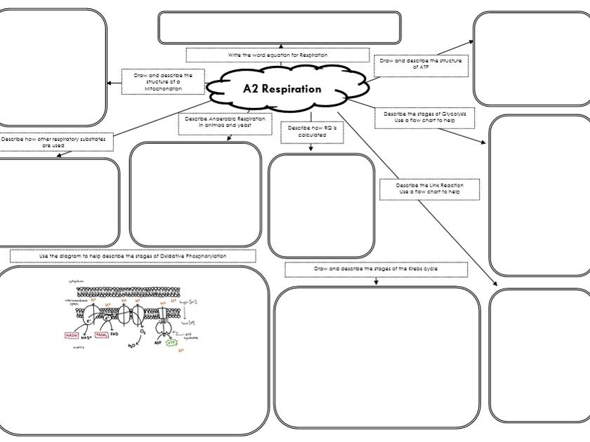 A2 Biology Revision Mats Bundle