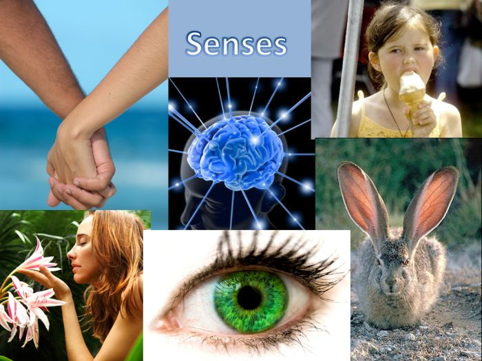The nervous system and senses