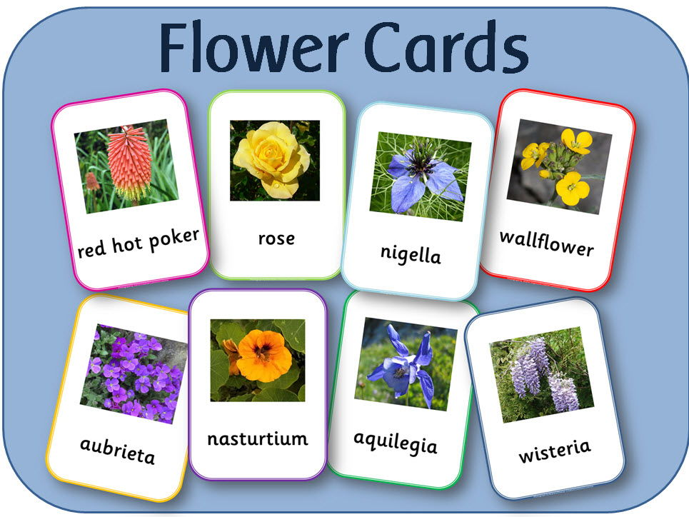 Flowers cards - For display, activities, observations etc.