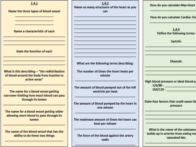 GCSE PE Revision: Cardiovascular System