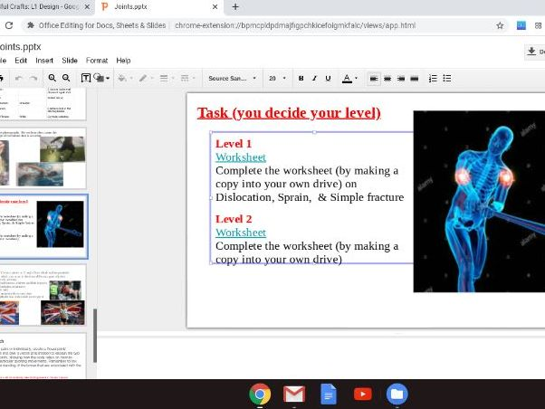 CH1: Skeletal System  & Joints, Muscular Fibre Types, Antagonistic Muscle Pairs
