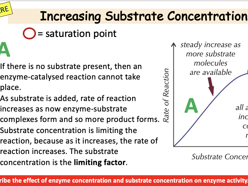 The Effect of Substrate and Enzyme concentrations on Rate of Reaction