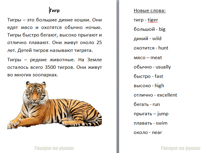Russian Comprehension Worksheet about Tiger 8pg