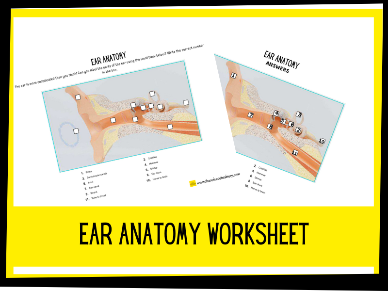 Label the ear worksheet | KS2 | Primary Science