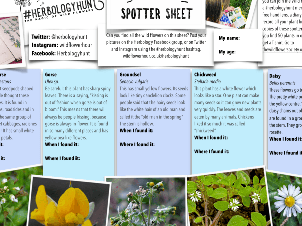 Herbologyhunt - get your students identifying and naming wild flowers!